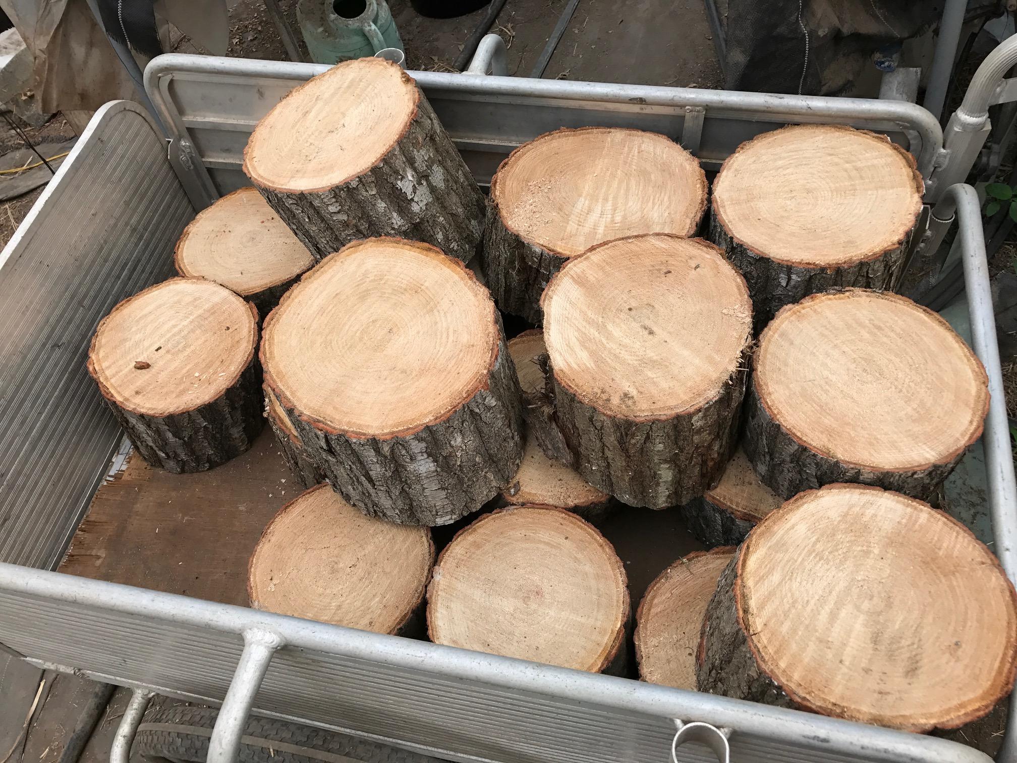 古河 ストロベリーファン シューティング 木