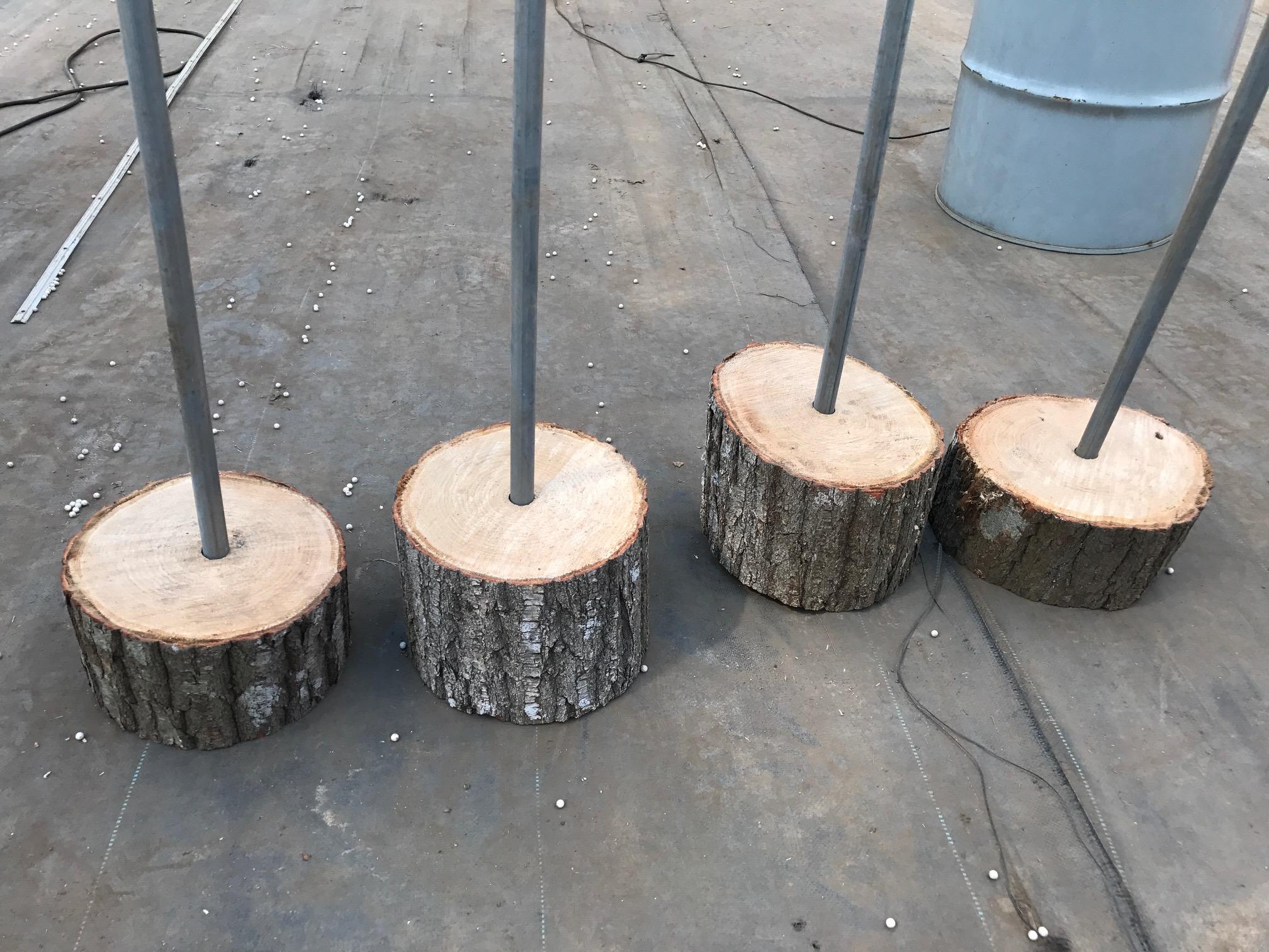 古河 ストロベリーファン シューティングレンジ 木材